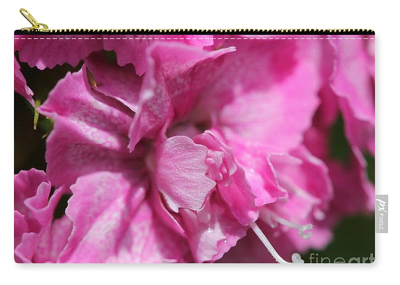 Mccombie Carry-all Pouch featuring the photograph Sweet William From The Super Duplex Bluepoint Mix by J McCombie
