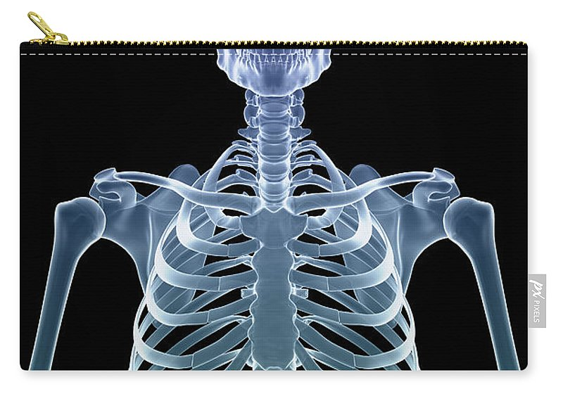 Cervical Vertebrae Carry-all Pouch featuring the photograph Bones Of The Upper Body by Science Picture Co