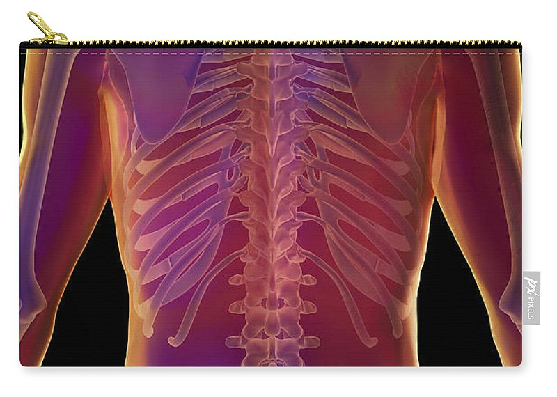 Transparent Carry-all Pouch featuring the photograph Bones Of The Upper Body by Science Picture Co