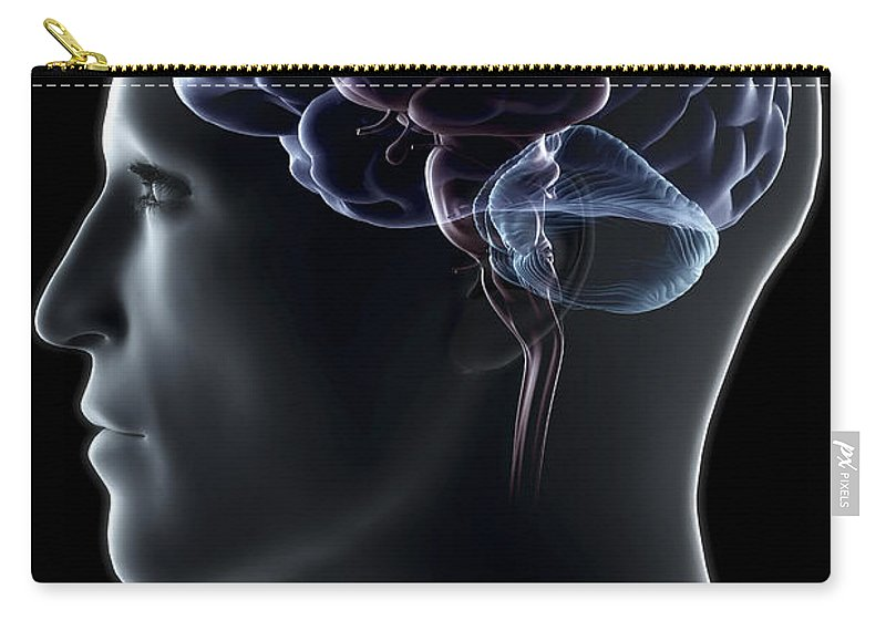Brain Hemisphere Carry-all Pouch featuring the photograph Human Brain by Science Picture Co