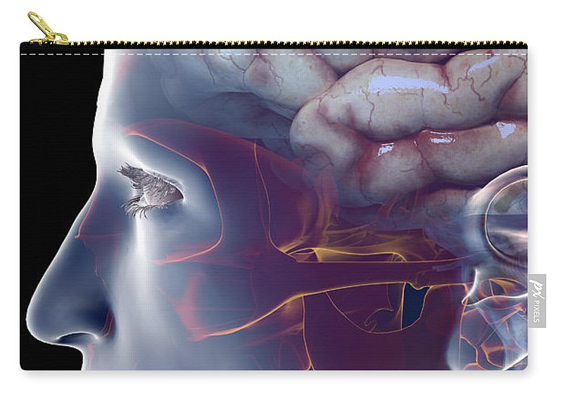 Central Sulcus Carry-all Pouch featuring the photograph Human Brain by Science Picture Co