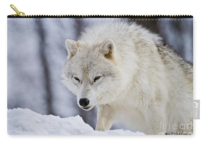 Arctic Wolf Photography Carry-all Pouch featuring the photograph Arctic Wolf by Wolves Only