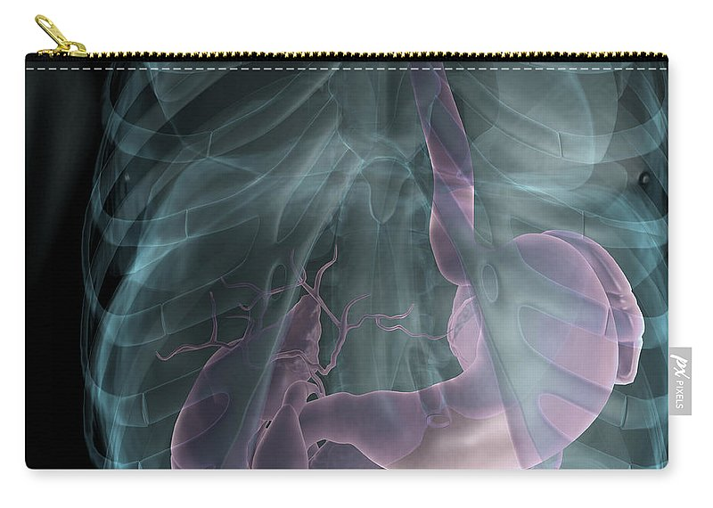 Abdomen Carry-all Pouch featuring the photograph The Digestive System by Science Picture Co