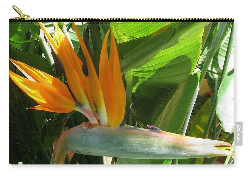 Bird Of Paradise Carry-all Pouch featuring the photograph Bird Of Paradise by Christiane Schulze Art And Photography