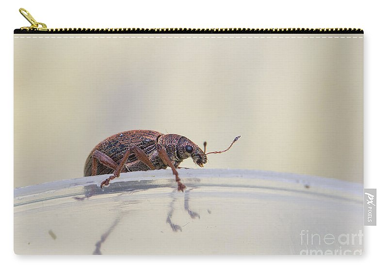 Broad-nosed Weevil Carry-all Pouch featuring the photograph Broad-nosed Weevil - Polydrusus Mollis by Jivko Nakev