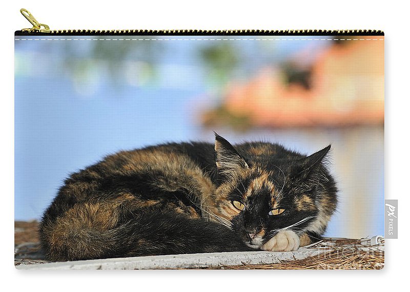 Cat; Cats; Feline; Tabby; Animal; Lie; Lying; Rest; Resting; Free; Alone; Greece; Hellas; Greek; Hellenic; Hydra; Argosaronic; Saronic; Gulf; Islands; Holidays; Island; Vacation; Travel; Trip; Voyage; Journey; Tourism; Touristic; Yellow; Eyes; Red; Black Carry-all Pouch featuring the photograph Cat In Hydra Island by George Atsametakis