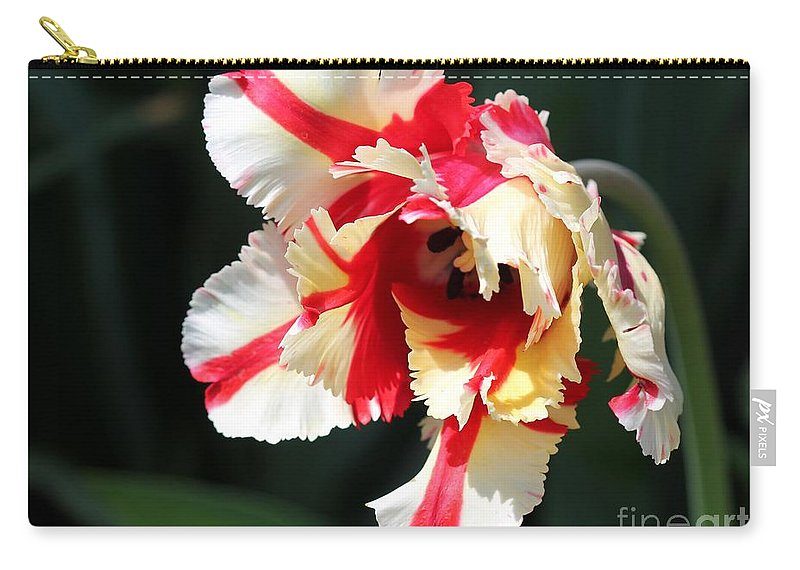 Mccombie Carry-all Pouch featuring the photograph Flaming Parrot Tulip by J McCombie
