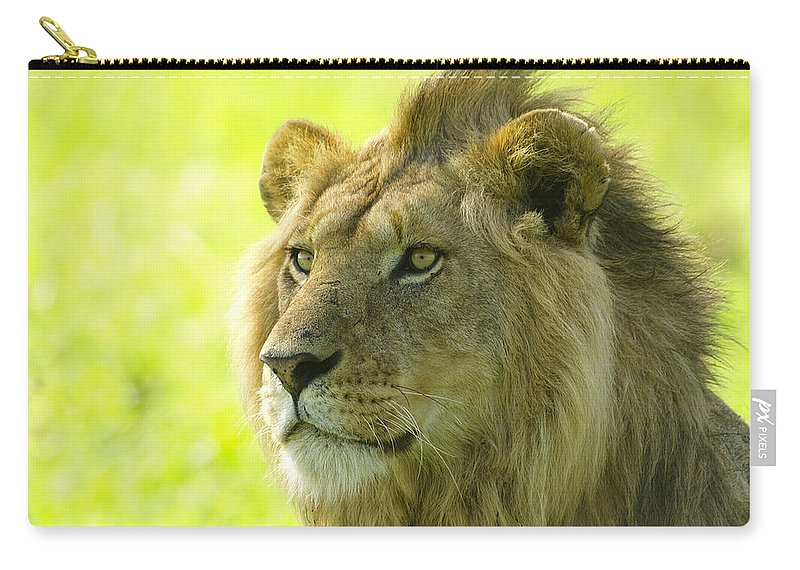 Lion Carry-all Pouch featuring the photograph Golden Boy by Michele Burgess