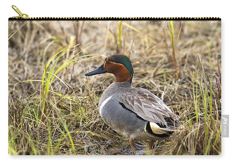 Doug Lloyd Carry-all Pouch featuring the photograph Greenwing Teal by Doug Lloyd
