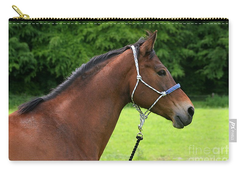 Bay Horse Carry-all Pouch featuring the photograph Horse Portrait by Angel Ciesniarska