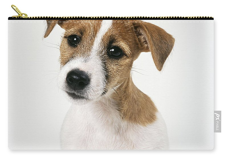 Daniels John Sale Terrier Jack Carry Russell By For Pouch All xPHARw