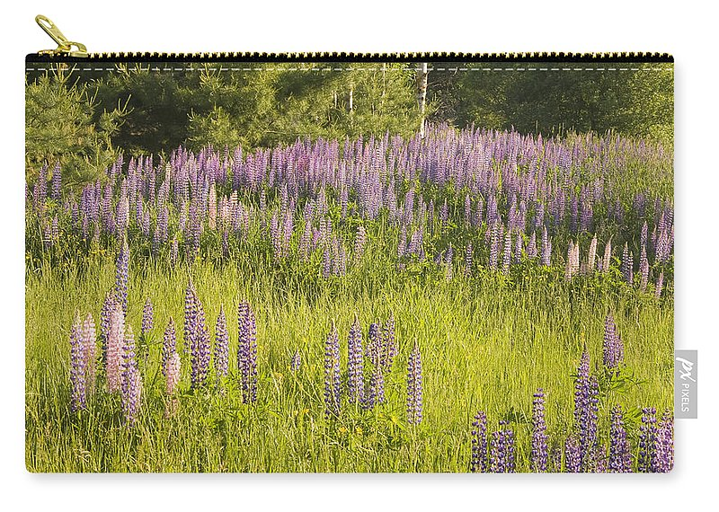 Field Carry-all Pouch featuring the photograph Maine Wild Lupine Flowers by Keith Webber Jr