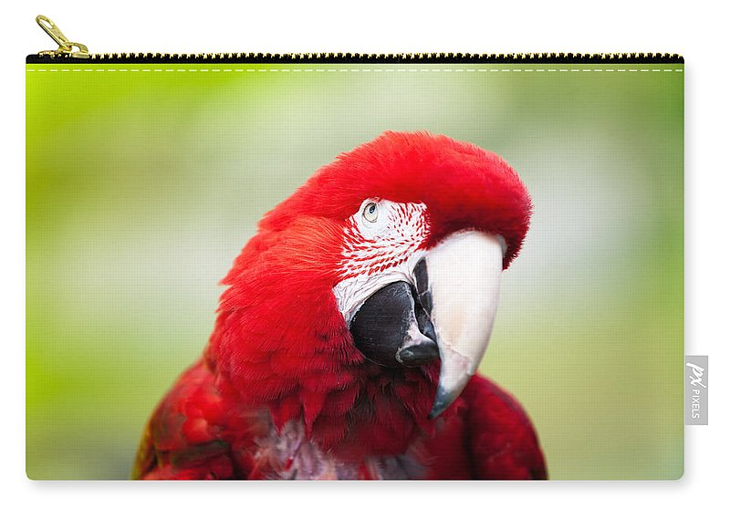 Parrot Carry-all Pouch featuring the photograph Parrot by Sebastian Musial