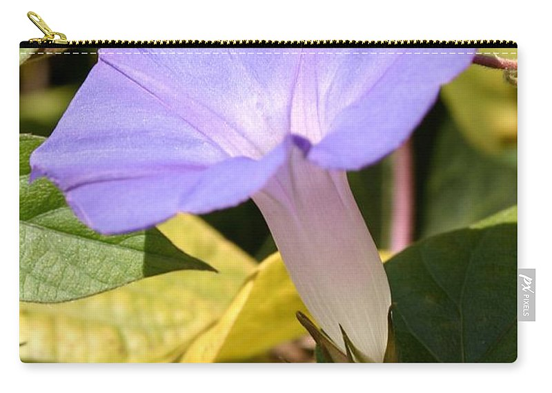 Beauty Carry-all Pouch featuring the photograph Purple Morning Glory by Henrik Lehnerer