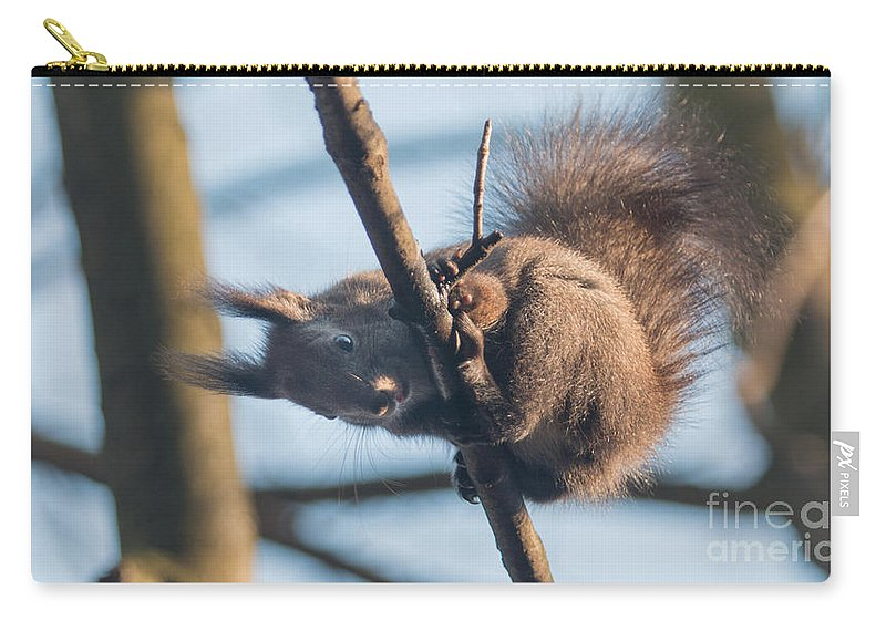 Sciurus Vulgaris Carry-all Pouch featuring the photograph Red Squirrel by Jivko Nakev