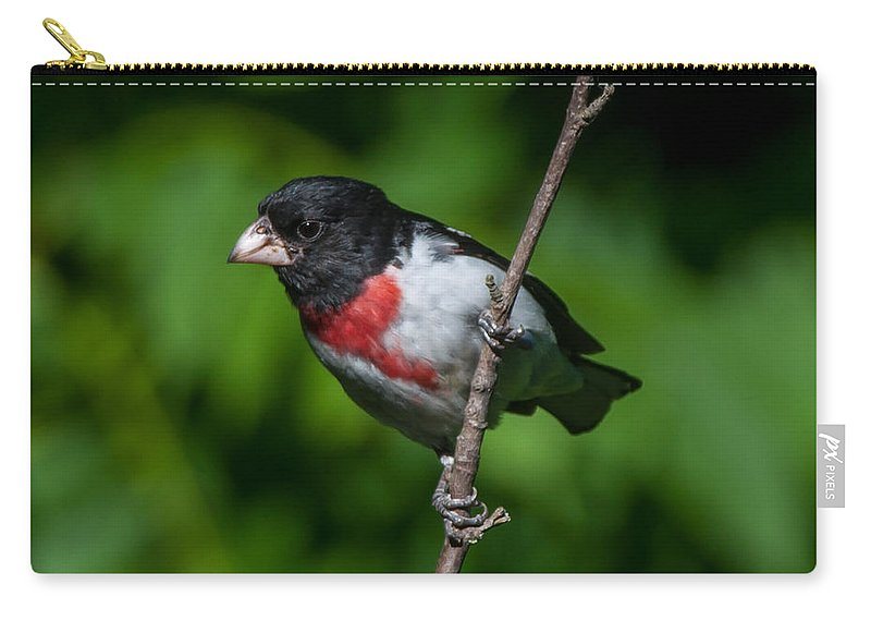 Bird Carry-all Pouch featuring the photograph Rose-breasted Grosbeak by Richard Kitchen