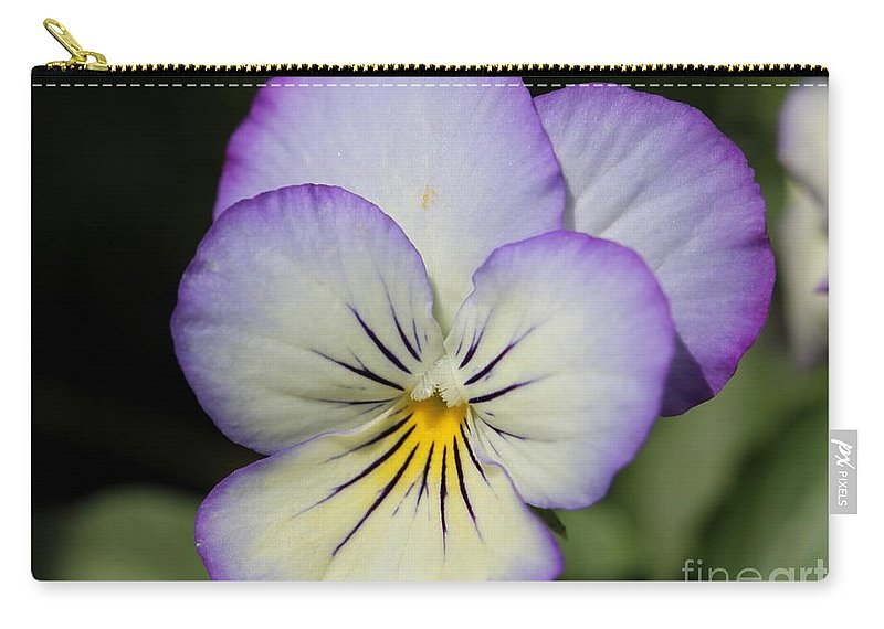 Mccombie Carry-all Pouch featuring the photograph Viola Named Sorbet Lemon Blueberry Swirl by J McCombie