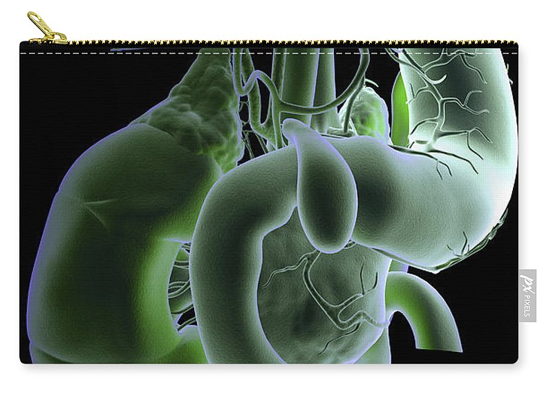 Cholecyst Carry-all Pouch featuring the photograph The Digestive System by Science Picture Co