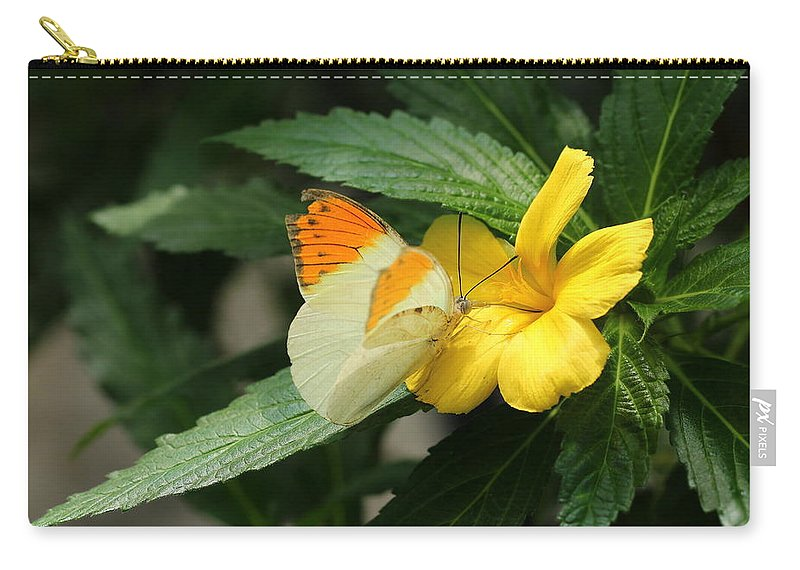Butterfly Carry-all Pouch featuring the photograph Butterfly by Heike Hultsch