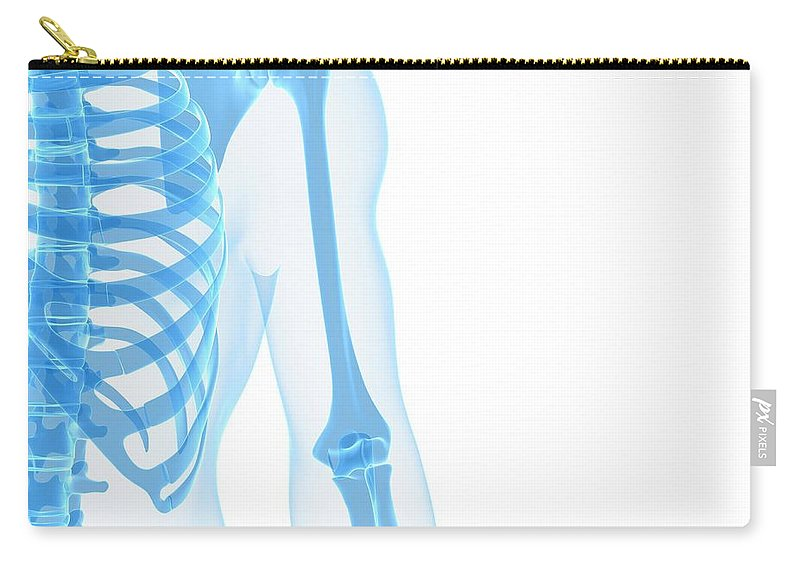 White Background Carry-all Pouch featuring the digital art Upper Body Bones, Artwork by Sciepro