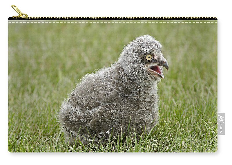 Snowy Owl Carry-all Pouch featuring the photograph Baby Snowy Owl by JT Lewis