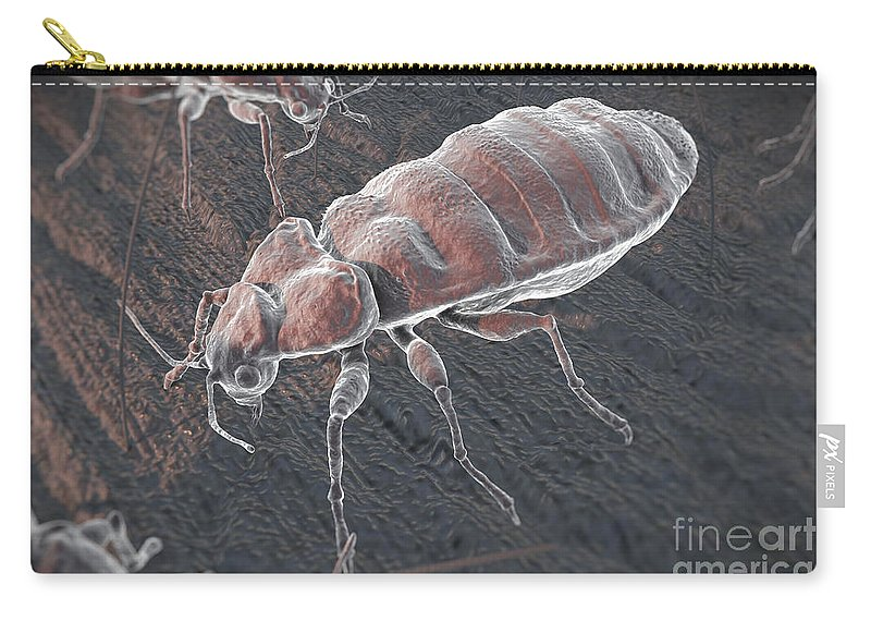 Haematophagy Carry-all Pouch featuring the photograph Bed Bugs Cimex Lectularius by Science Picture Co