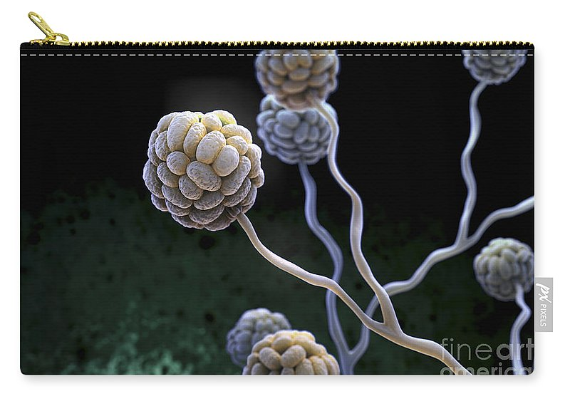 High Scale Magnification Carry-all Pouch featuring the photograph Black Mold Spores by Science Picture Co