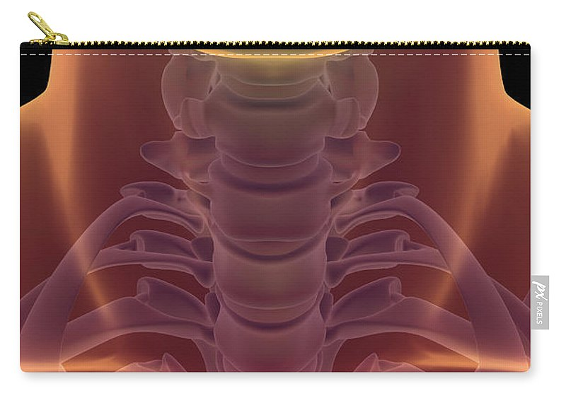 Transparency Carry-all Pouch featuring the photograph Bones Of The Neck by Science Picture Co