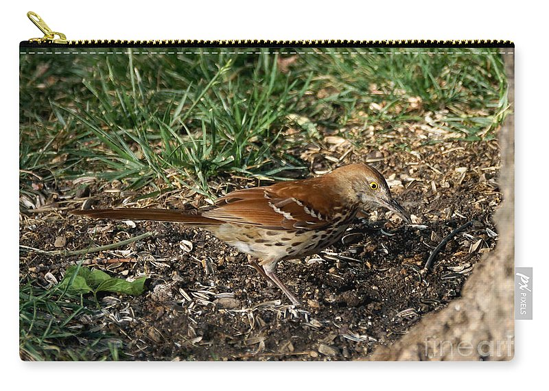 Birds Carry-all Pouch featuring the photograph Brown Thrasher by Lori Tordsen