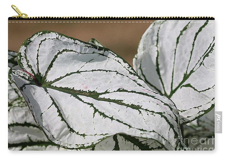 Caladium Carry-all Pouch featuring the painting Caladium Named White Christmas by J McCombie