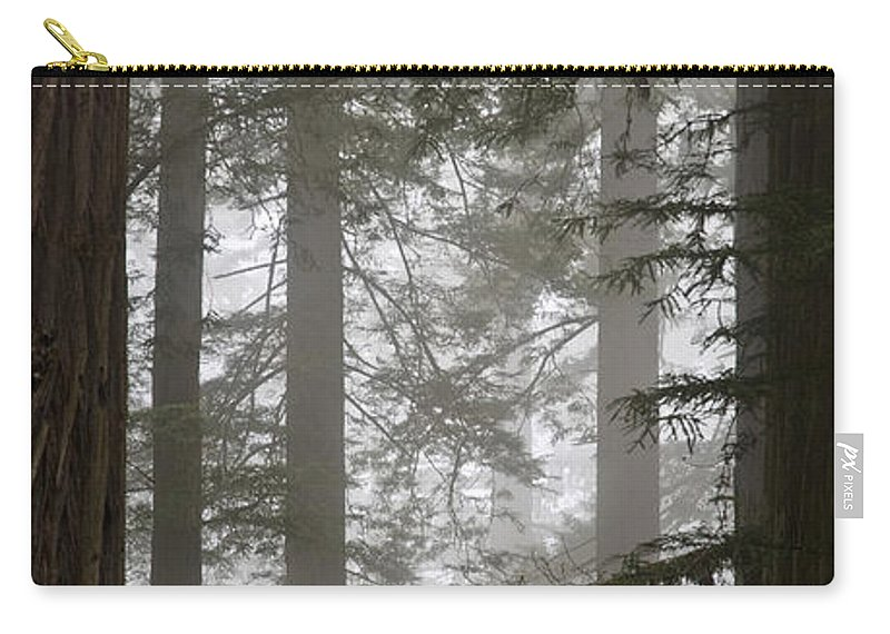 Plant Carry-all Pouch featuring the photograph Foggy Coast Redwood Forest by Gregory G. Dimijian, M.D.