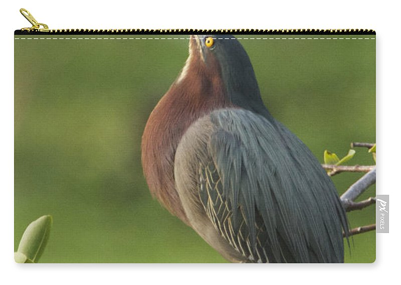 Green Carry-all Pouch featuring the photograph Green Heron by Dee Carpenter