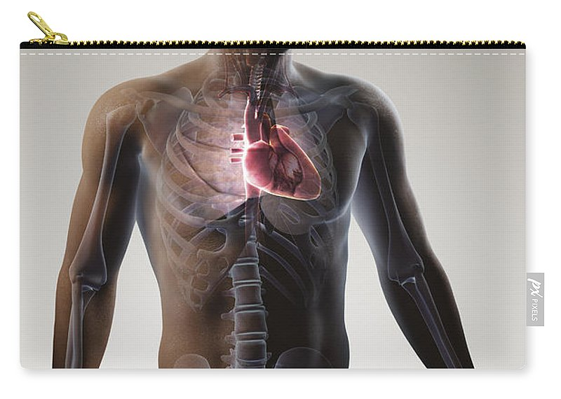 Gray Background Carry-all Pouch featuring the photograph Heart Within The Chest by Science Picture Co