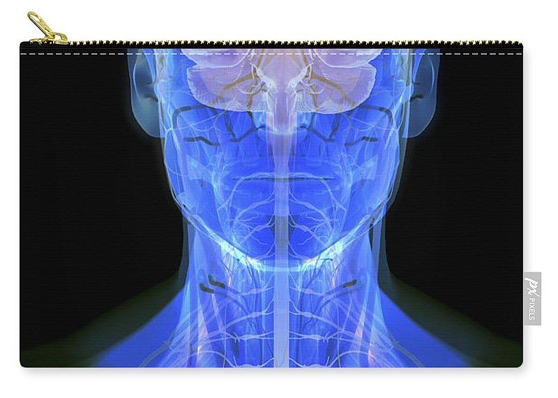 Human Body Carry-all Pouch featuring the photograph Human Brain by Science Picture Co