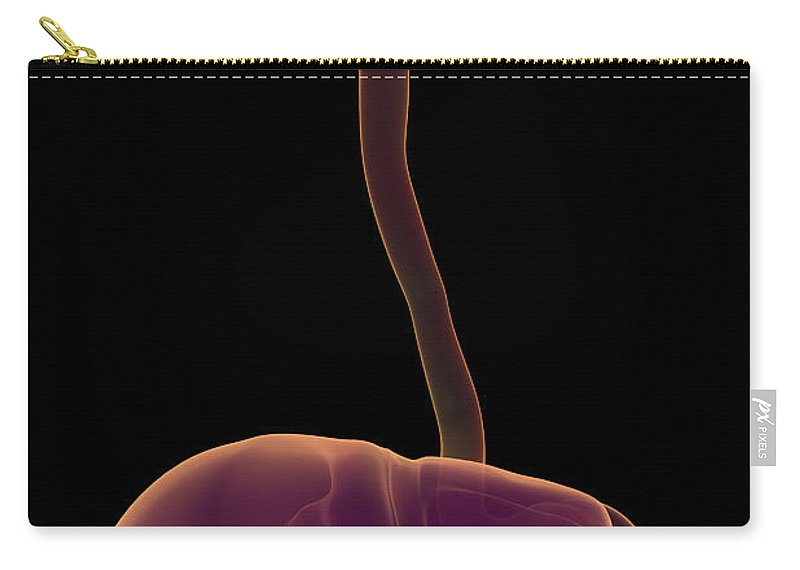 Internal Organs Carry-all Pouch featuring the photograph The Digestive System by Science Picture Co
