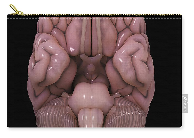 Hemisphere Carry-all Pouch featuring the photograph Human Brain by Science Picture Co