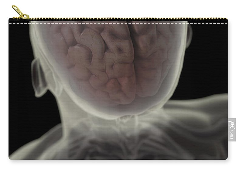 Skeletal System Carry-all Pouch featuring the photograph Human Brain by Science Picture Co