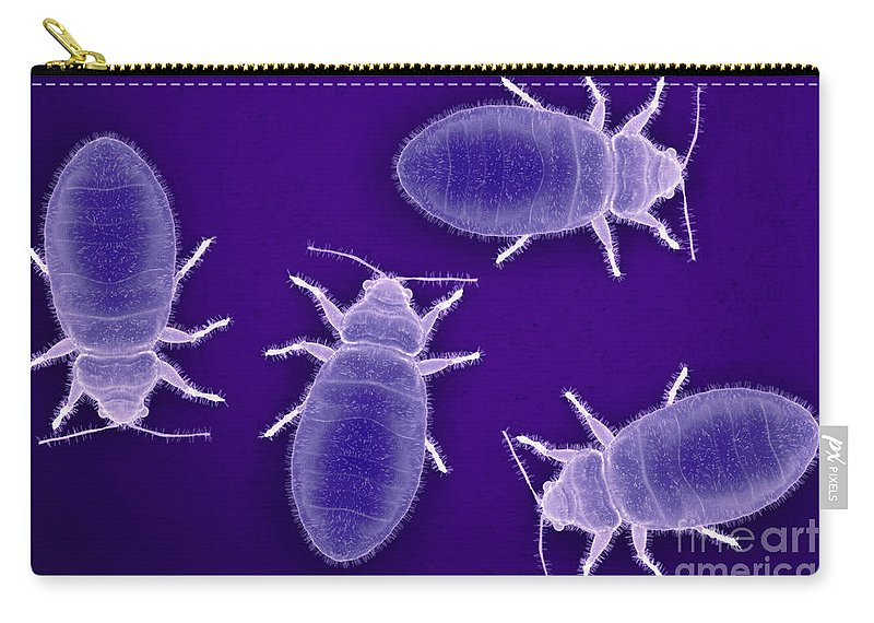 Parasites Carry-all Pouch featuring the photograph Bed Bugs Cimex Lectularius by Science Picture Co