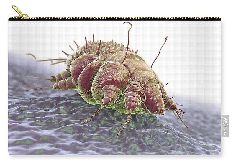 Close-up Carry-all Pouch featuring the photograph Scabies Mite by Science Picture Co