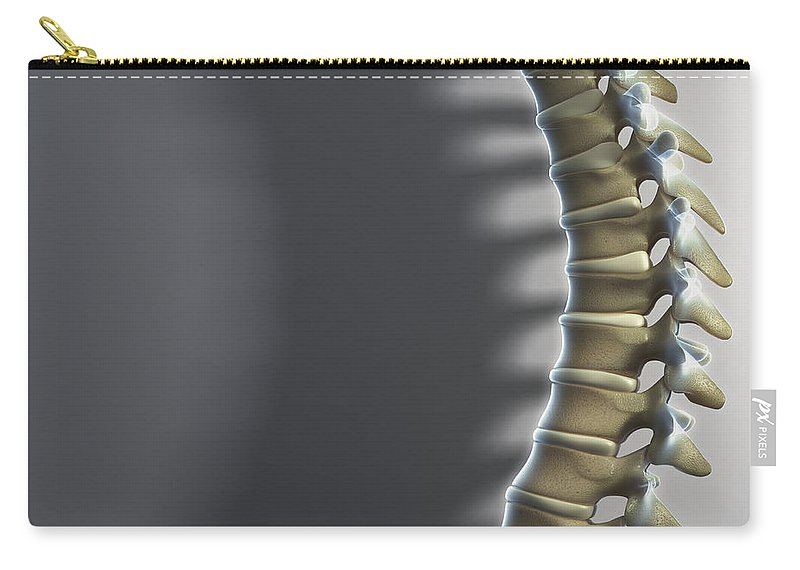 Close-up Carry-all Pouch featuring the photograph Spinal Anatomy by Science Picture Co