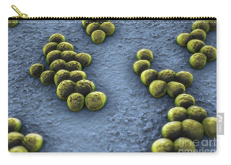 3d Visualisation Carry-all Pouch featuring the photograph Superbug Mrsa by Science Picture Co
