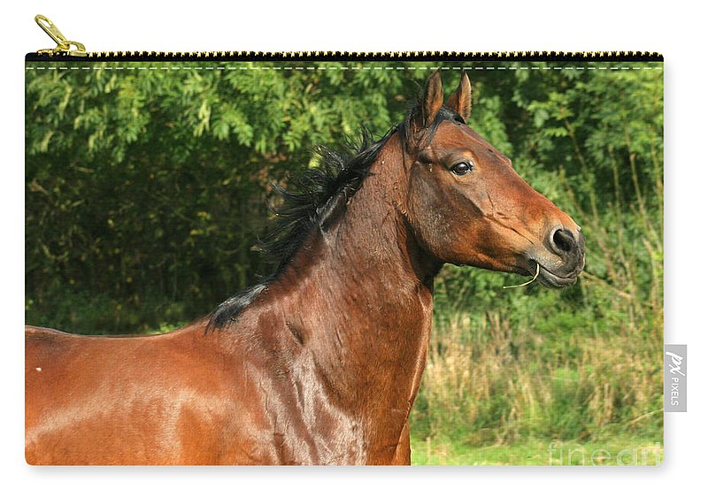 Horse Carry-all Pouch featuring the photograph The Bay Horse by Angel Ciesniarska