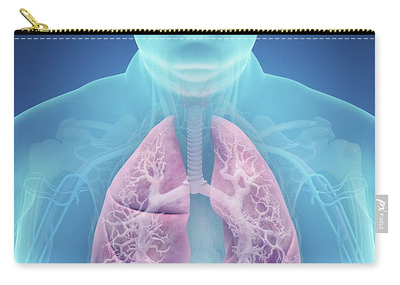Thorax Carry-all Pouch featuring the photograph Obesity by Science Picture Co