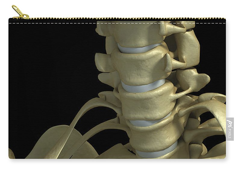 Bone Carry-all Pouch featuring the photograph Bones Of The Neck by Science Picture Co