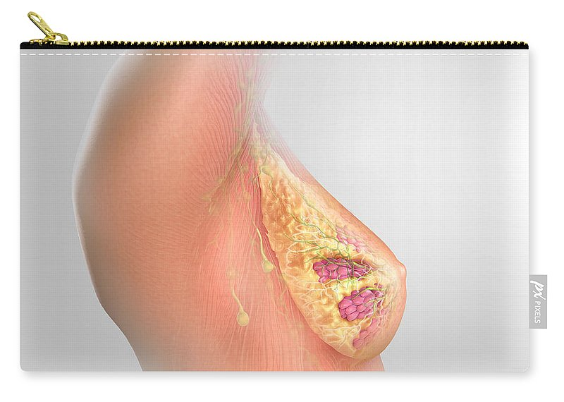 Mammary Lobe Carry-all Pouch featuring the photograph Breast Anatomy by Science Picture Co