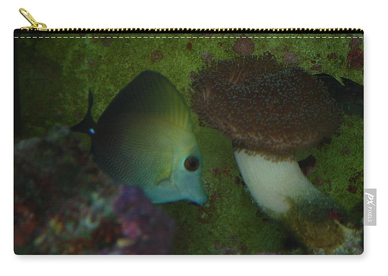 Taken Through Side Of Aquarium Carry-all Pouch featuring the photograph Tropical Fish And Coral by Robert Floyd