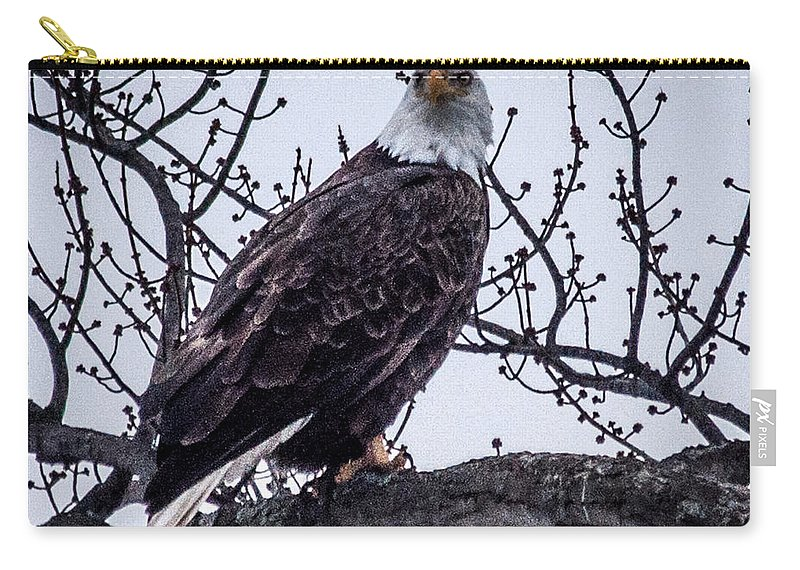 Bald Eagle Carry-all Pouch featuring the photograph Bald Eagle by Ronald Grogan