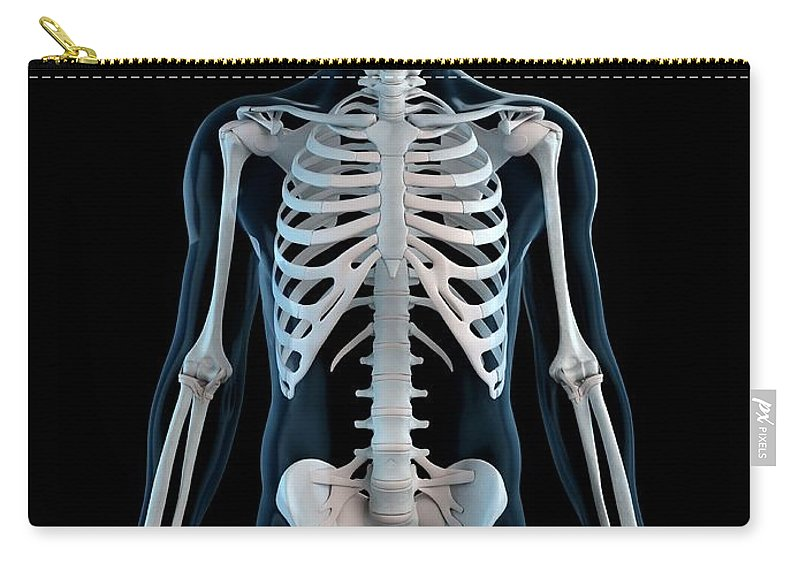 Physiology Carry-all Pouch featuring the digital art Human Skeleton, Artwork by Sciepro