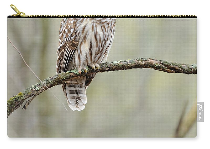 Barred Owl Carry-all Pouch featuring the photograph Barred Owl by Scott Linstead