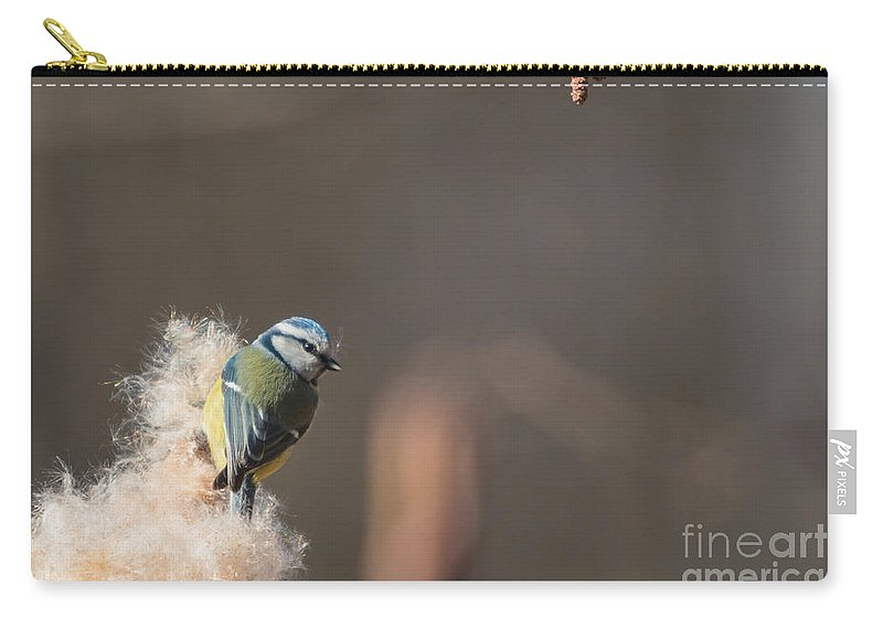 Parus Caeruleus Carry-all Pouch featuring the photograph Blue Tit by Jivko Nakev
